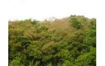 Đánh giá tổng giá trị kinh tế rừng Dẻ- xã Hoàng Hoa Thám- Chí Linh - Hải Dương