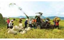 Kinh doanh lúa có phải kê khai nộp thuế không